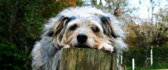 Social Media Burnout, Exhausted Dog